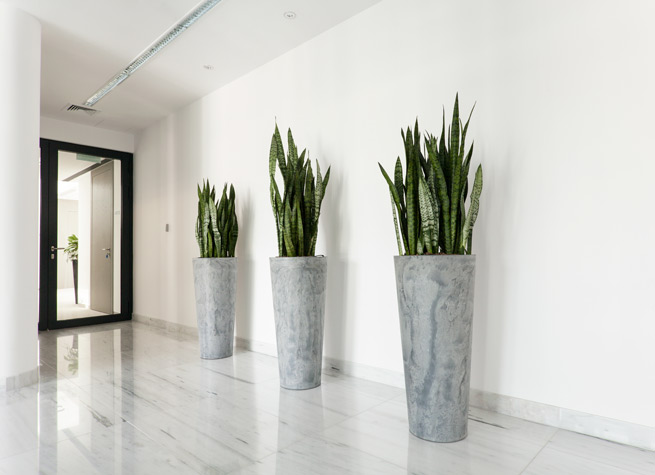 indoor planter in contemporary style
