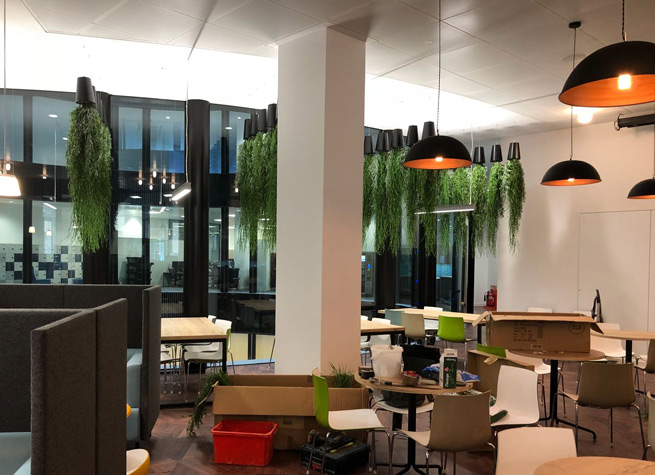 commrecial office interior with artificial plants